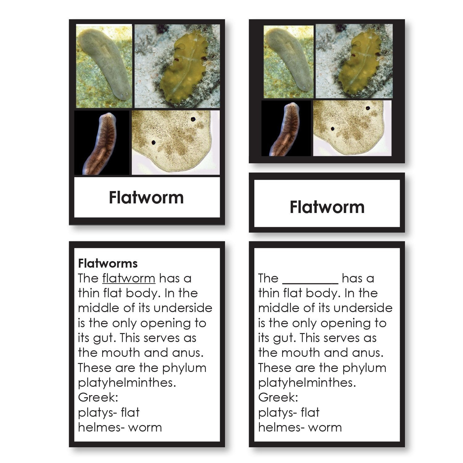 Zoology-Animal Classification/ Identification - Animal Kingdom Classification 3-Part Cards With Definitions