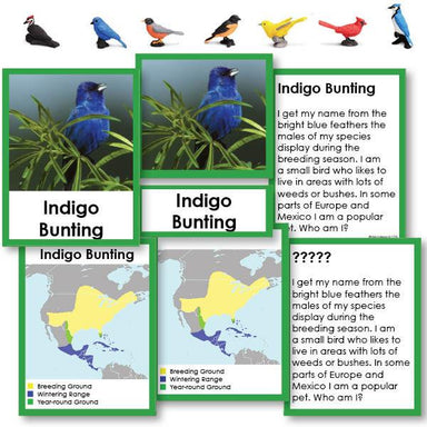 "Zoology-Animal Classification/ Identification - Backyard Birds ""Who Am I?"" 3-Part Cards With Maps And Objects"