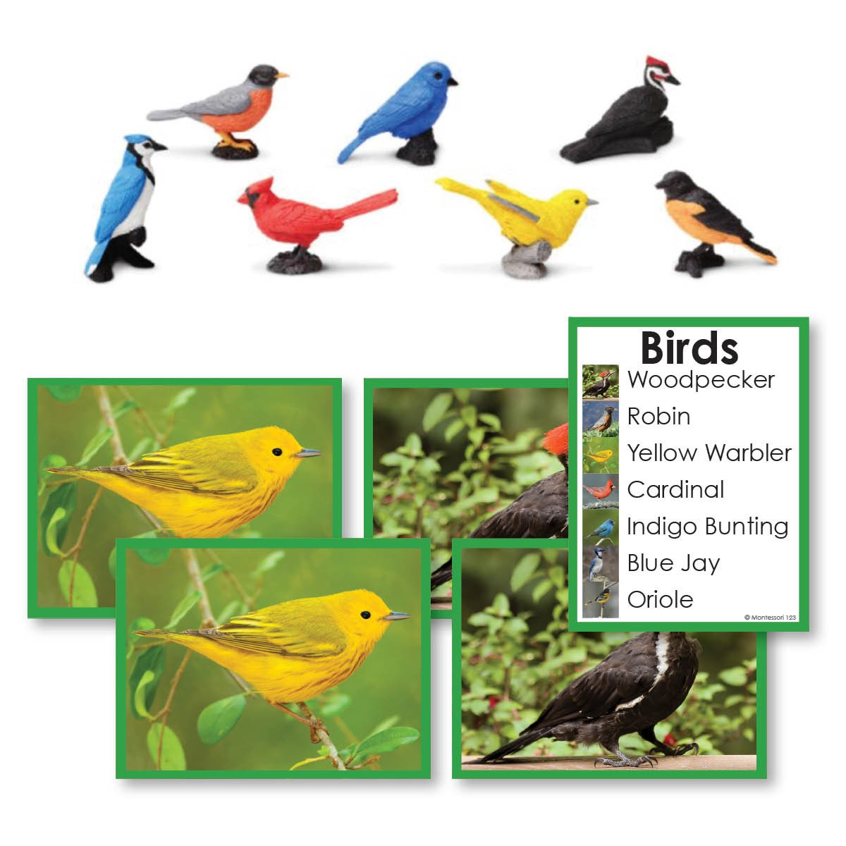 Zoology-Animal Classification/ Identification - Birds Toddler Cards With Objects