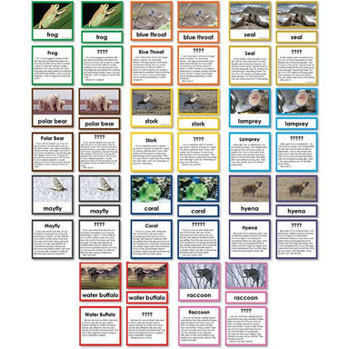 "Zoology-Animal Classification/ Identification - Collection Of 11 Zoology ""Who Am I?"" 3-Part Cards"