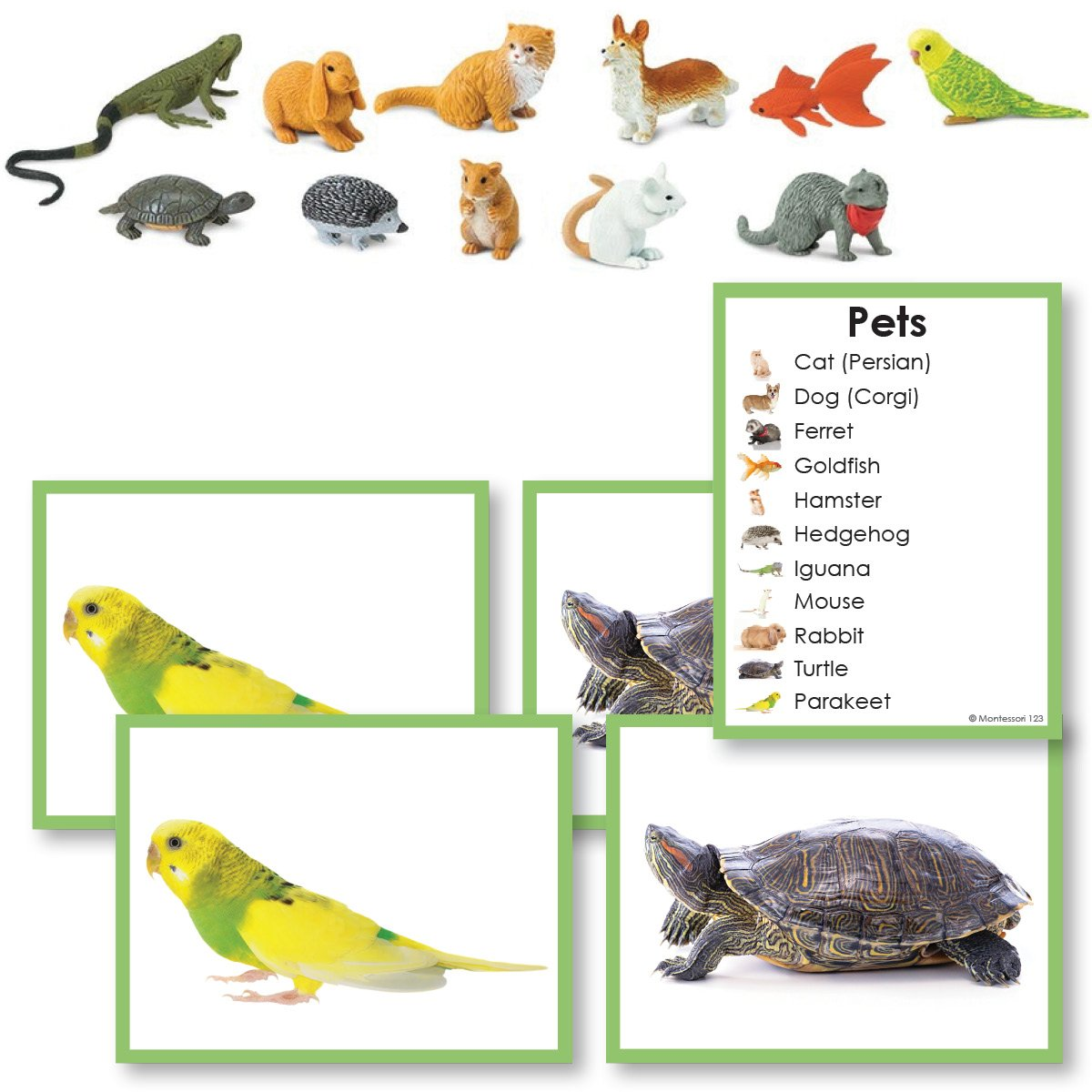 Zoology-Animal Classification/ Identification - Pets Toddler Cards With Objects