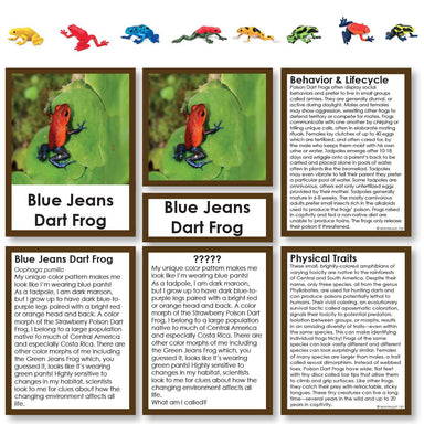 "Zoology-Animal Classification/ Identification - Poison Dart Frogs ""Who Am I?"" 3-Part Cards With Objects"