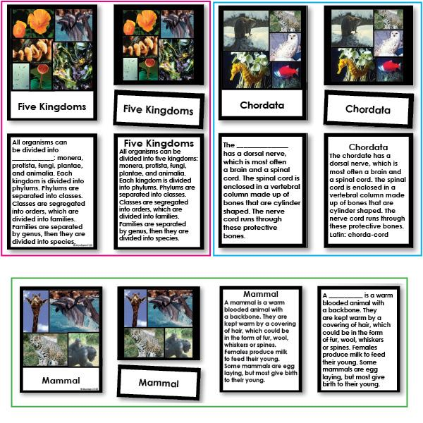 Zoology-Animal Classification/ Identification - Set Of Three Animal Classification Works, 3-Part Cards With Definitions