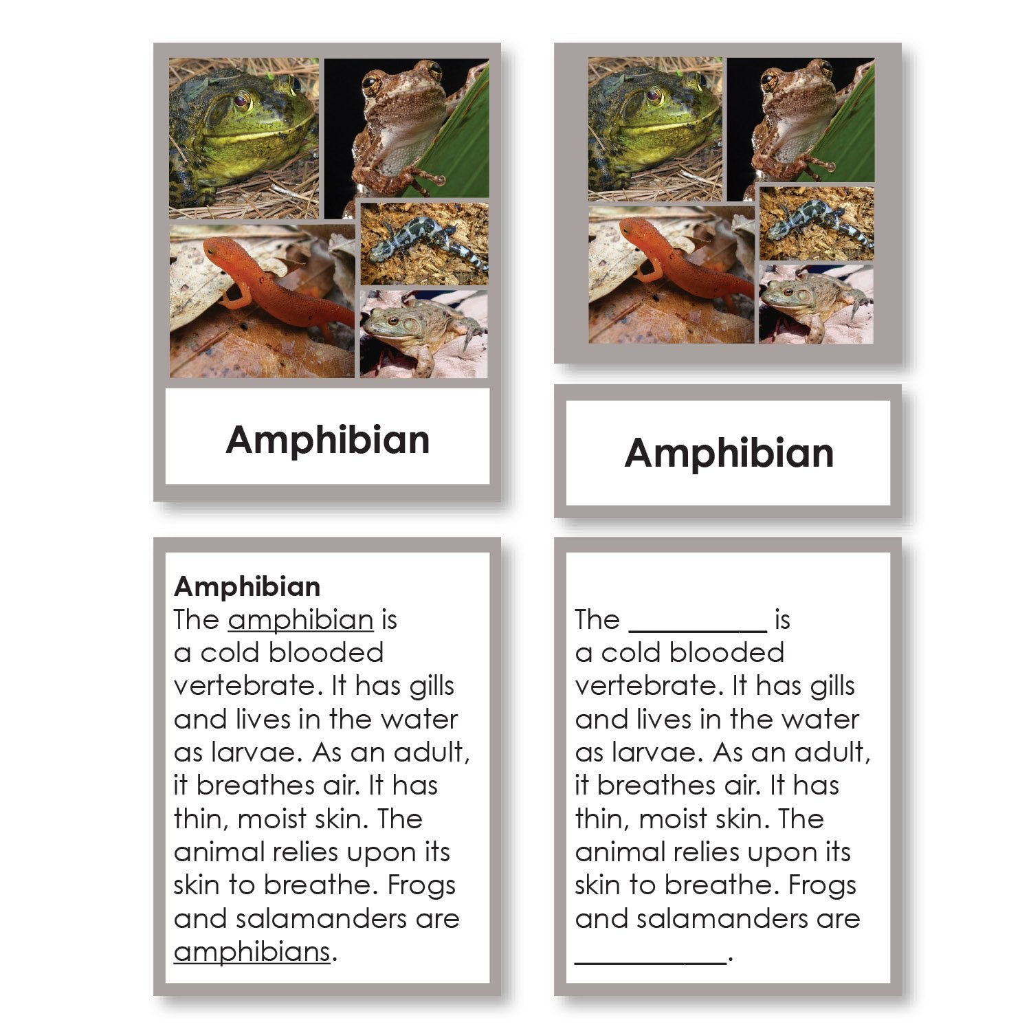 Zoology-Animal Classification/ Identification - Vertebrate Classification 3-Part Cards With Definitions