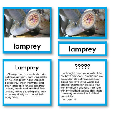 "Zoology-Animal Classification/ Identification - Zoology ""Who Am I?"" 3-Part Cards - Fish"