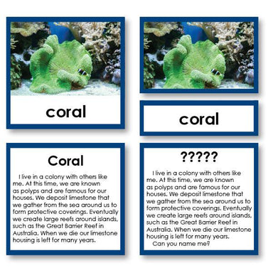"Zoology-Animal Classification/ Identification - Zoology ""Who Am I?"" 3-Part Cards - Invertebrates"