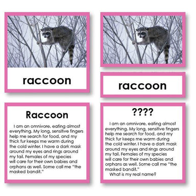 "Zoology-Animal Classification/ Identification - Zoology ""Who Am I?"" 3-Part Cards - Mammals Set 3"