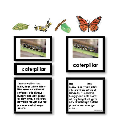 Zoology-Life Cycles - Butterfly Life Cycle 3-Part Cards Wtih Objects