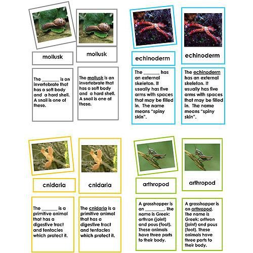 Zoology-Parts Of Invertebrates - Collection Of 8 Invertebrate Sets, 3-Part Cards With Definitions