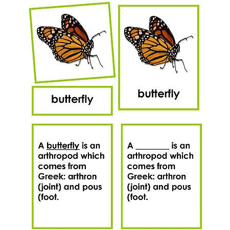 Zoology-Parts Of Invertebrates - Parts Of A Butterfly 3-Part Cards With Definitions And Object