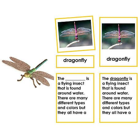 Zoology-Parts Of Invertebrates - Parts Of A Dragonfly 3-Part Cards With Definitions And Object