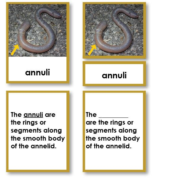 Zoology-Parts Of Invertebrates - Parts Of An Annelid (earthworm) 3-Part Cards With Definitions