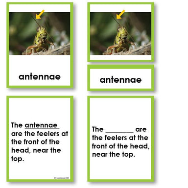Zoology-Parts Of Invertebrates - Parts Of An Arthropod (grasshopper) 3-Part Cards With Definitions
