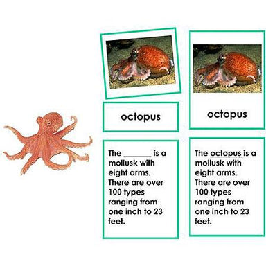 Zoology-Parts Of Invertebrates - Parts Of An Octopus 3-Part Cards With Definitions And Object