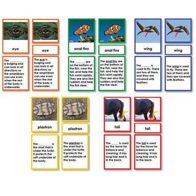 Zoology-Parts Of Vertebrates - Collection Of 5 Sets Parts Of All Chordates 3-Part Cards With Definitions And Objects