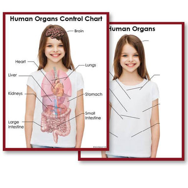 Zoology-Parts Of Vertebrates - Human Organs 3-Part Cards With Definitions, Objects And Matching Charts