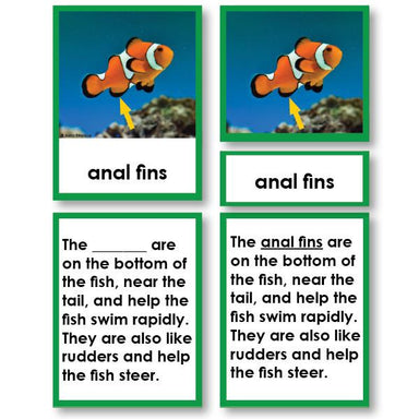 Zoology-Parts Of Vertebrates - Parts Of A Fish 3-Part Cards With Definitions And Object