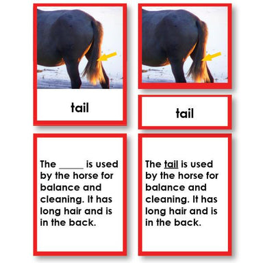 Zoology-Parts Of Vertebrates - Parts Of A Mammal 3-Part Cards With Definitions And Object
