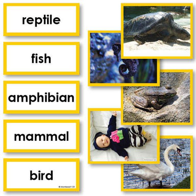 Zoology-Sorting Games - Chordata Sorting Cards For Fish, Amphibian, Reptile, Bird, Or Mammal