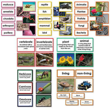 Zoology-Sorting Games - Collection Of Seven Sorting Materials