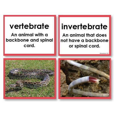 Zoology-Sorting Games - Invertebrate Or Vertebrate Sorting Cards