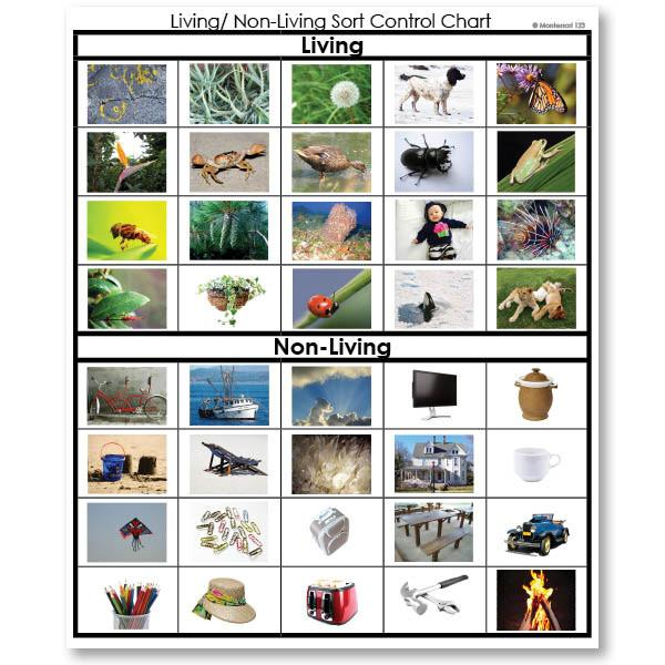Zoology-Sorting Games - Living Or Non-Living Sorting Cards