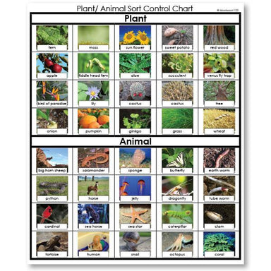 Zoology-Sorting Games - Plant Or Animal Sorting Cards