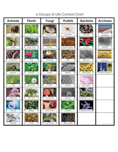 Zoology-Sorting Games - Six Groups Of Life Sorting Cards For Fungi, Animals, Bacteria, Archaea, Protists, Plants
