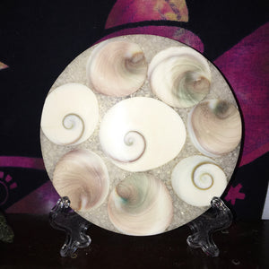 Shiva Shell Round Slab with Stand - The Whimsy Crystal Shop