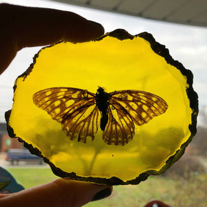 Pressed Amber Butterfly (Natural Ethically Sourced!!)