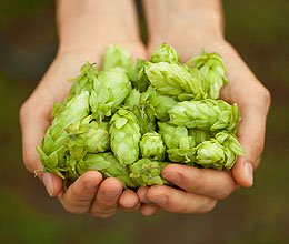 hops_in_hands_1_.jpg