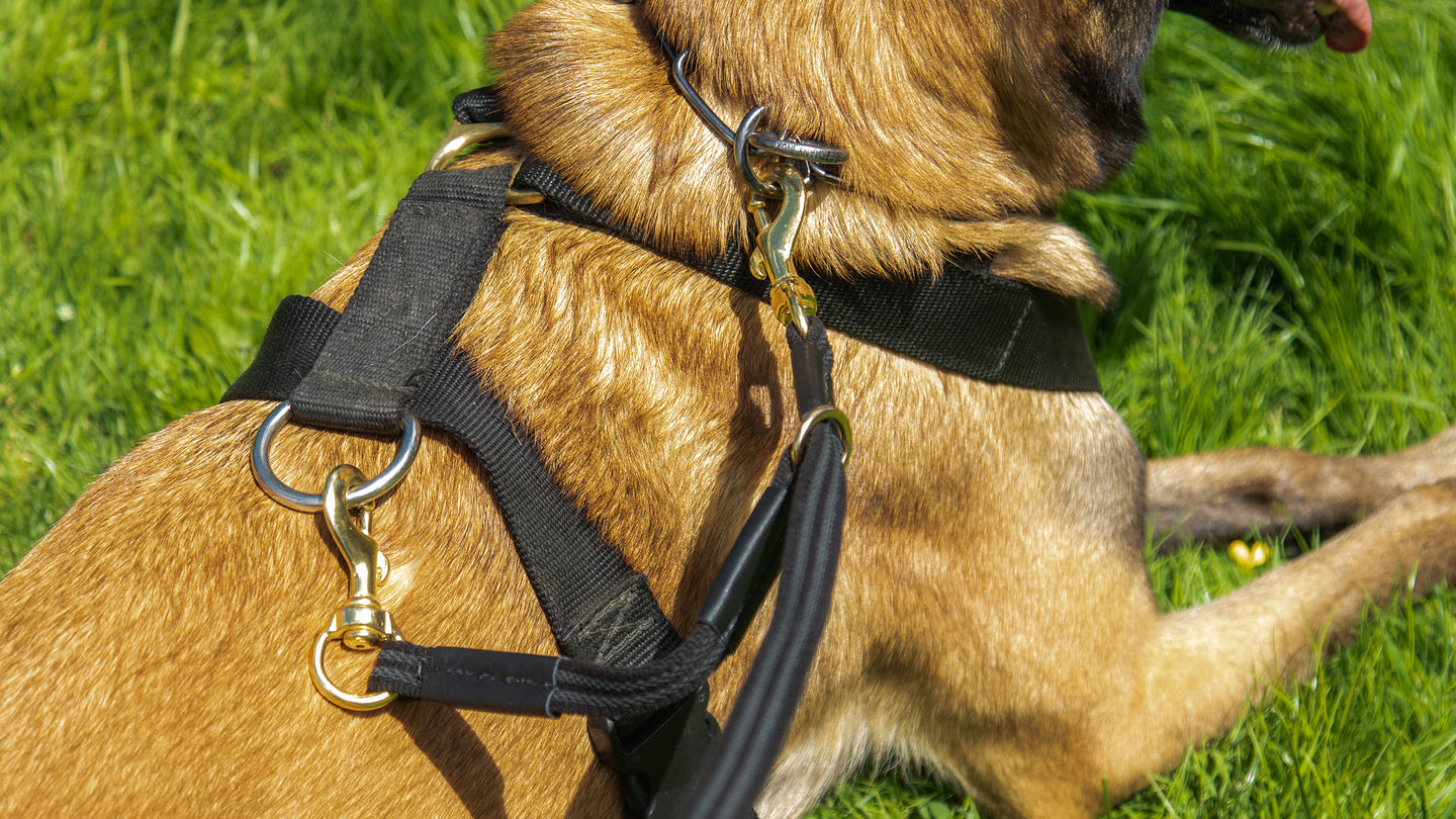 Safety Leashes & Attachments
