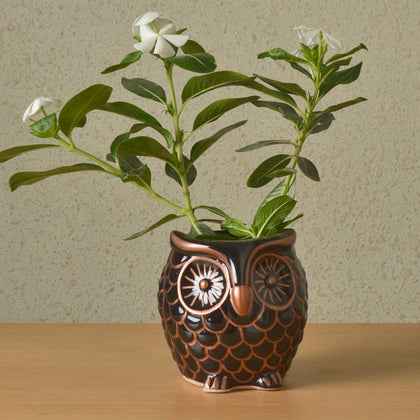 Black Copper Ceramic Owl Shaped Planter| Flower Pots for Garden Decor BOGO