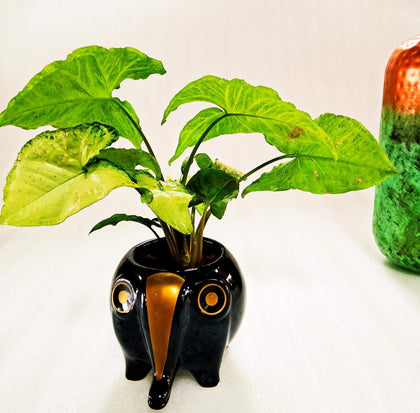 Ceramic Black Elephant Indoor Planter
