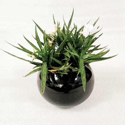 Ceramic Black Modern Indoor Planter |Decorative Planter For Home Decor BOGO