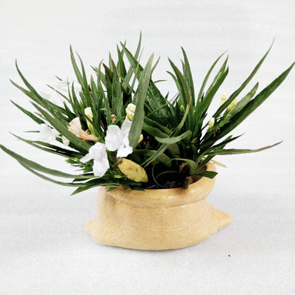Ceramic Indoor Sack Planter |Indoor Plant Pot For Home BOGO
