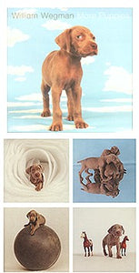 More Puppies Notecard Box - ImageExchange