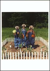 Garden Trio, 1996 Postcards (Set of 12) - ImageExchange