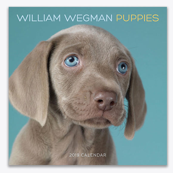 Puppies 2019 Wall Calendar - ImageExchange