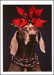 Point-Hedda Holiday Notecards (Set of 12) - ImageExchange