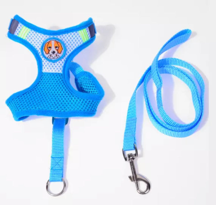 Harness and Leash for Cats and Small dogs blue