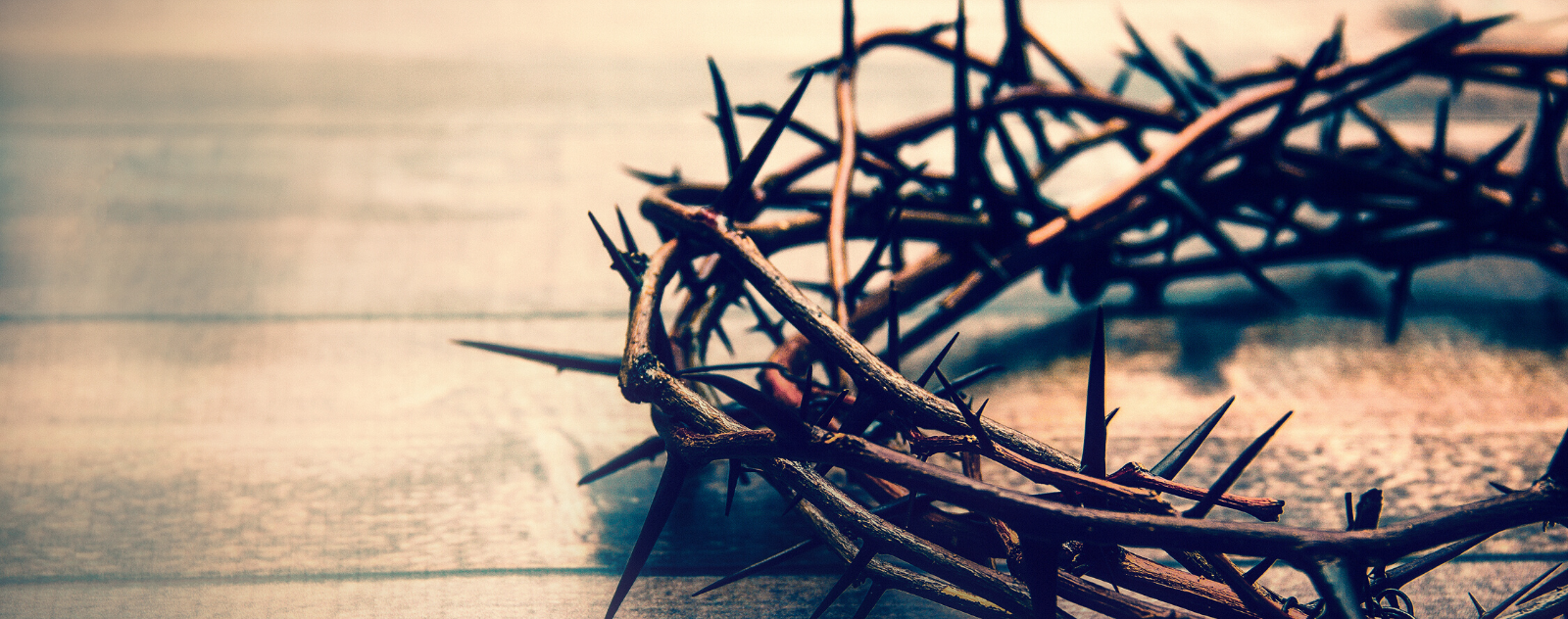 crown of thorns in the bible