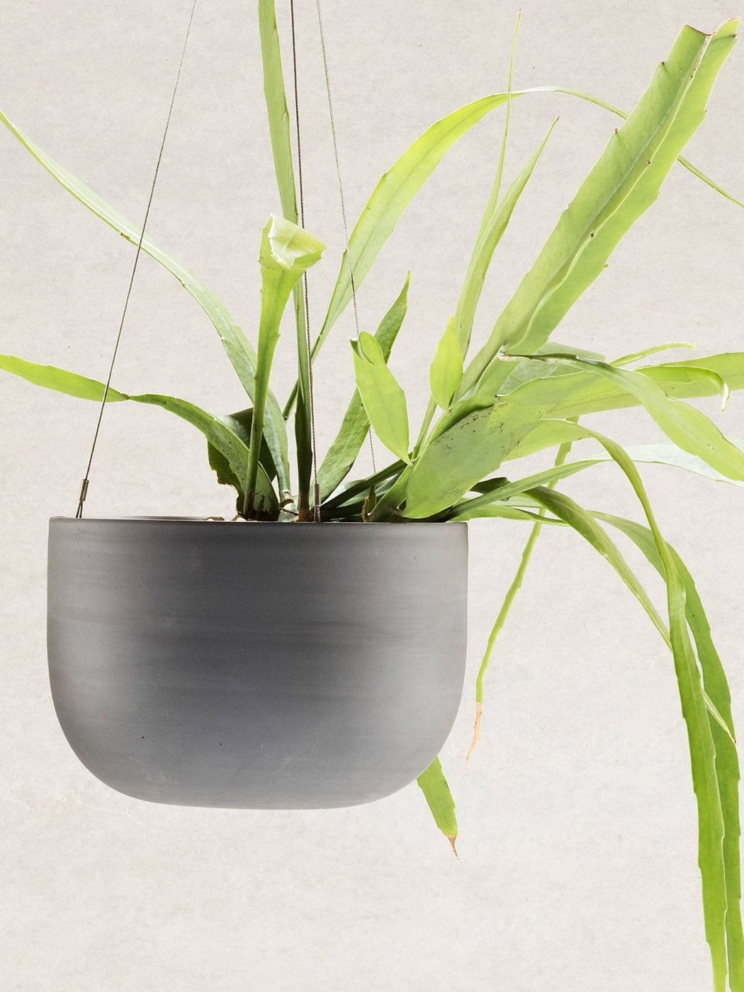 Raw Earth Hanging Planter (SMALL)