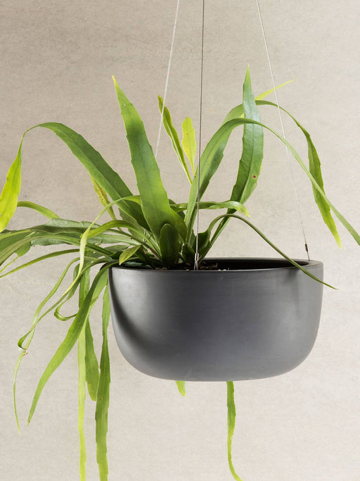 Raw Earth Hanging Planter (LARGE)