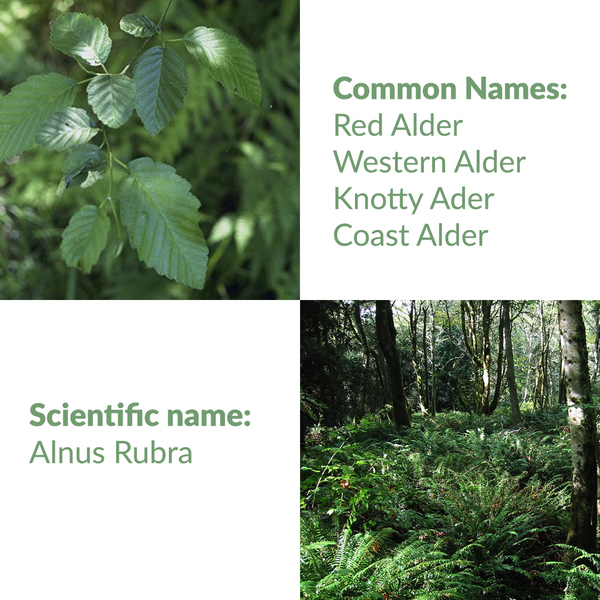 Knotty Alder: common and scientific names
