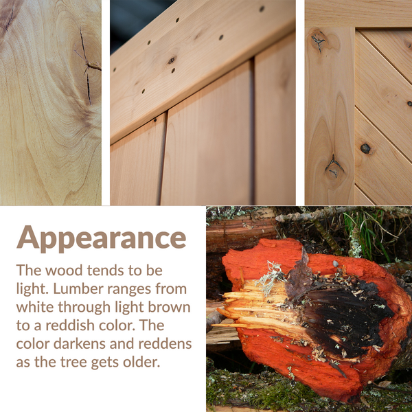 Knotty Alder: wood appearance and coloration