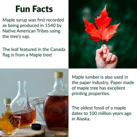 RealCraft Wood Species 101 Series: Maple. Fun and interesting facts about the maple tree
