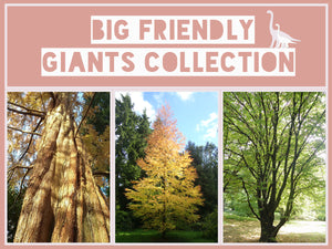 The Big Friendly Giants Collection