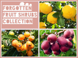 The Forgotten Fruit Shrubs Collection
