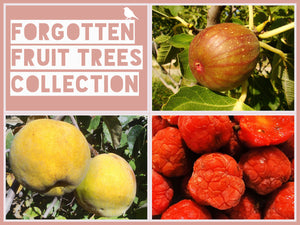 The Forgotten Fruit Trees Collection